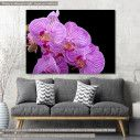 Canvas print, Orchids