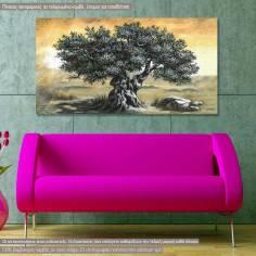 Canvas print Olive tree panoramic