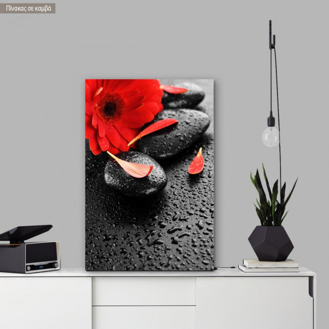 Canvas print spa stones & red flower