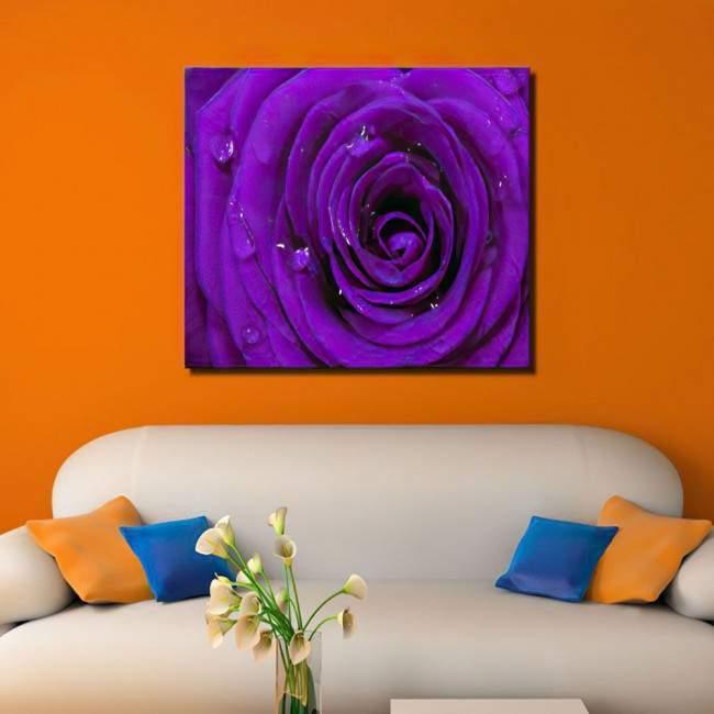 Πίνακας σε καμβά Τριαντάφυλλο, Purple rose
