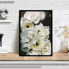 Bouquet White roses, poster