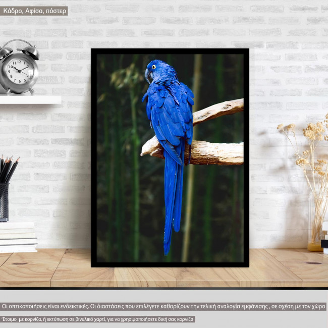 A blue parrot, @the_real_napster, Poster