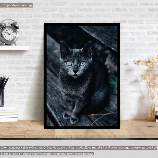 A blackish cat, @yespanioly, Poster