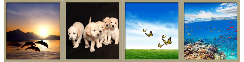Ζώα - άγρια ζωή σε ταπετσαρίες τοίχου, πόστερ - αφίσες