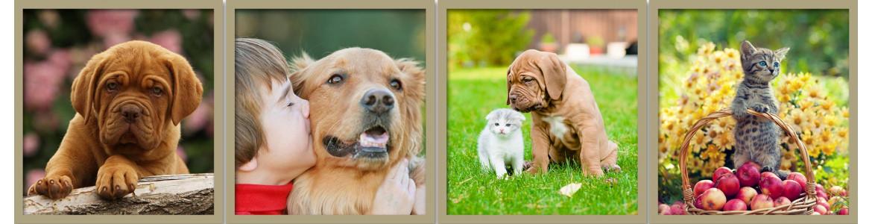 αυτοκόλλητα , πίνακες , ταπετσαρίες για κτηνιάτρους και pet shops