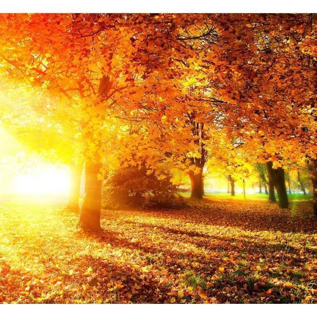 Φθινοπωρινό τοπίο στο δάσος, φωτογραφική ταπετσαρία