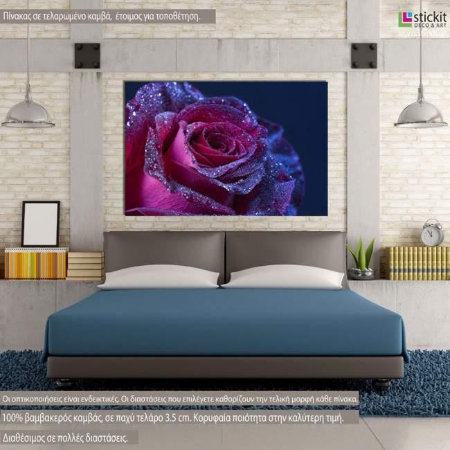 Πίνακας σε καμβά, Τριαντάφυλλο, Purple rose drops