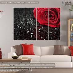 Rose with water drops, τετράπτυχος πίνακας σε καμβά