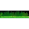 Φυτά της Ζούγκλας, μπορντούρα