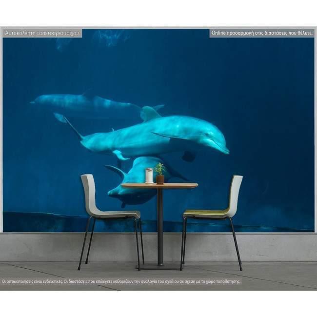 Δελφίνια στο βυθό , φωτογραφική ταπετσαρία