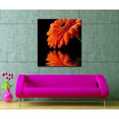 Πίνακας σε καμβά, Μαργαρίτα, Orange daisy reflections