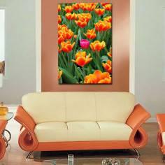Ροζ τουλίπα ανάμεσα σε πορτοκαλί, πίνακας σε καμβά