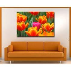 Πίνακας σε καμβά, Ροζ τουλίπα