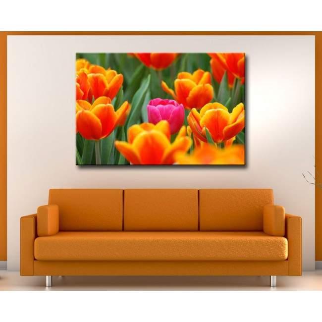 Ροζ τουλίπα ανάμεσα σε πορτοκαλί | Πίνακας σε καμβά